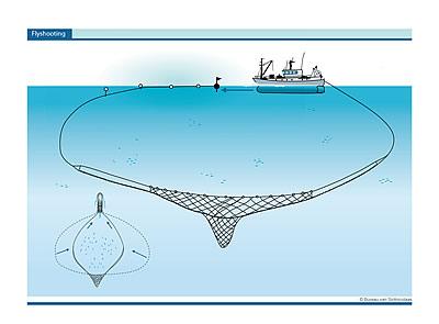 flyshoot visserij